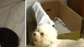 Cảm động cảnh chó mẹ chăm sóc báo đen bị bỏ rơi