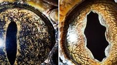 Sâu thẳm bên trong đôi mắt của các loài vật có gì? Loạt ảnh được zoom cận cảnh sau đây chính là câu trả lời cho điều đó