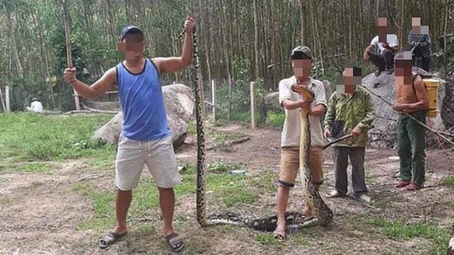 Clip: Trăn 22kg nuốt nguyên con dê 25kg ở Quảng Nam