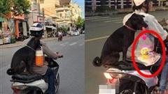 Chú chó 'hot' trên MXH: Sáng mang cặp lồng tối mang đèn đi chơi, ngồi xe máy dạo quanh phố