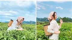 Chụp bộ ảnh phong cách 'lên núi hái chè', cô nàng hot girl khiến cộng đồng mạng xôn xao bởi nhan sắc ấn tượng