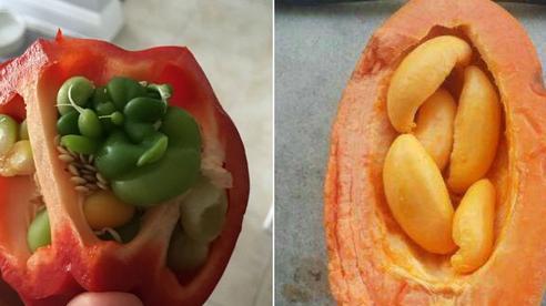 Mua trái cây về nhà ăn, dân mạng hoảng hồn khi chứng kiến những hình ảnh siêu dị biệt: Thế này thì vứt đi được chưa?