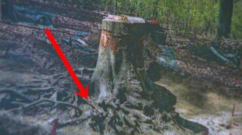 Máy bay nổ khiến phi công thiệt mạng nhưng không tìm thấy xác, 70 năm sau người ta sững sờ phát hiện hài cốt 'chìm' dưới rễ cây một cách kì ảo