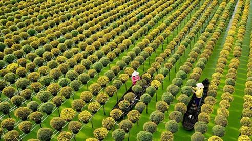 Sắc màu làng hoa Sa Đéc