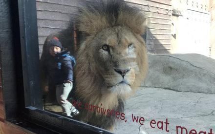 Bức ảnh bé trai đứng cạnh con sư tử hung tợn khiến ai nhìn vào cũng thót tim cho đến khi nghe câu chuyện xúc động của người mẹ