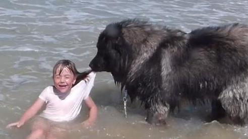 Bé gái đang tắm biển thì chú chó to lớn tiếp cận ngoạm vào áo như thể sắp sửa tấn công đứa trẻ và diễn biến sau đó khiến ai cũng mỉm cười