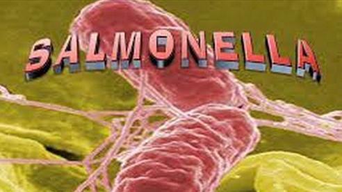 Vi khuẩn kháng thuốc có thể lây lan cả khi không dùng kháng sinh