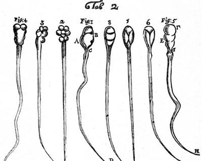 Những mô tả đầu tiên về hình ảnh tinh trùng thỏ (1-4) và chó (5-8)