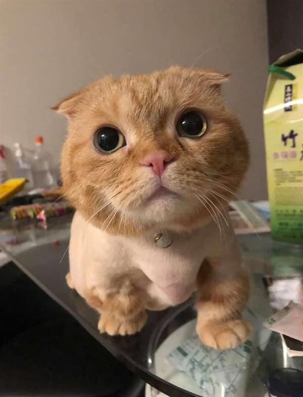 Đây là gương mặt đáng yêu của chú mèo nhỏ.