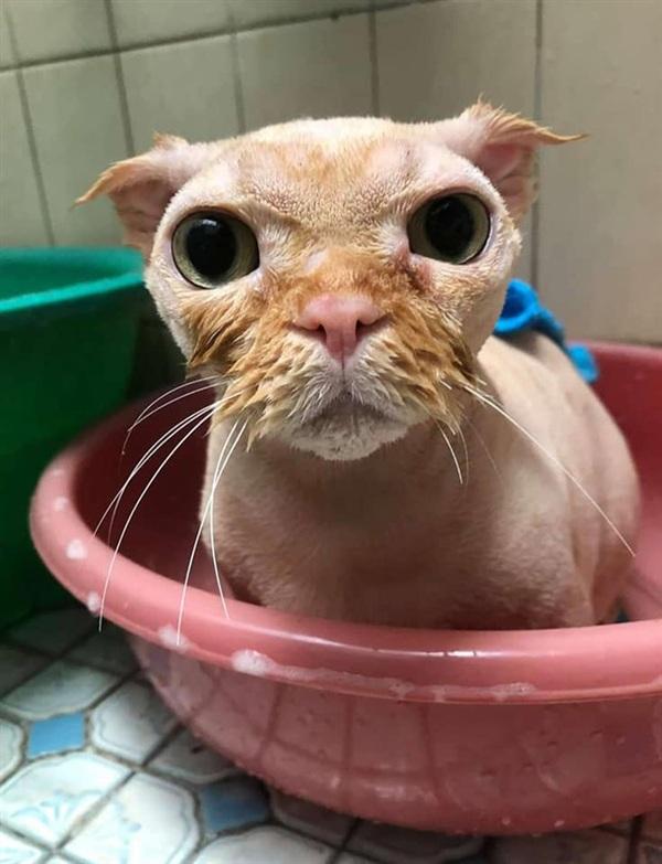 Khi được đem đi tắm, mèo ta cũng không bớt quạu đi chút nào.