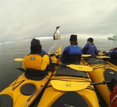 Bạn tôi chụp được khoảnh khắc chú cánh cụt nhảy khỏi mặt nước nè.