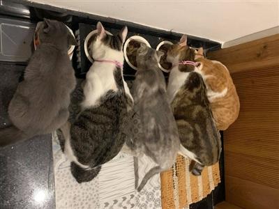 5 'đại boss' nhà Thuỳ Linh, từ trái qua: Bí, Chuột, Lèo, Kẹo, Nắng.