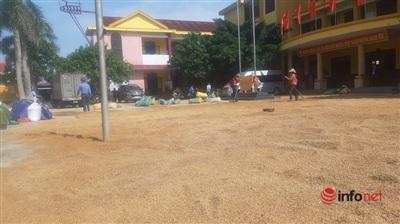 Hết mưa, nước rút nên người dân xã Võ Ninh tranh thủ mang lúa đến sân UBND xã để phơi.