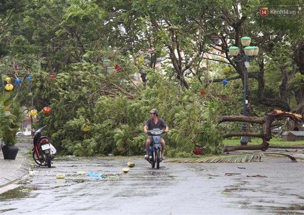Một cành cây cổ thụ bị gãy đổ chắn ngang đường (Ảnh: Ngọc Thắng)