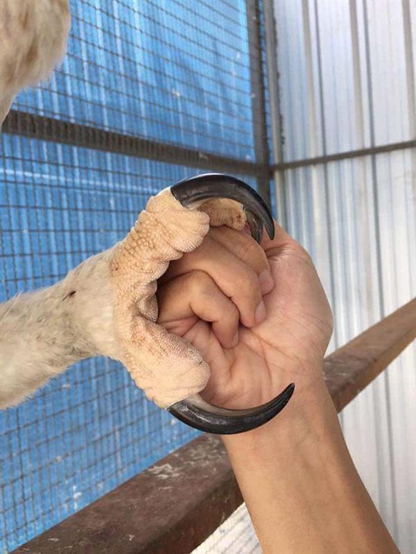 Móng vuốt 'khủng' của loài chim khổng lồ