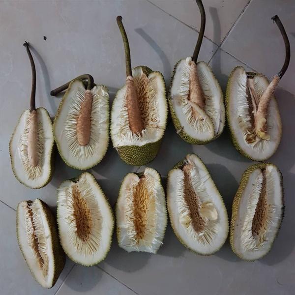 5 trái mít huyền thoại: không hạt, không mùi, không cả múi