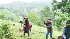 Hà Nội hỗ trợ 670 hộ đồng bào dân tộc thiểu số thoát nghèo