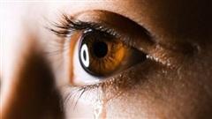 Sự thật về người đàn ông chuyên dạy khóc ở Nhật Bản