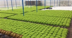 Nông dân công nghệ cao làm vườn... trực tuyến