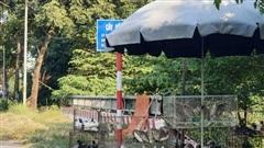'Chợ chim hoang dã' ngay cửa ngõ Thủ đô