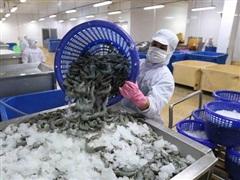 Minh Phú phản hồi kết luận về áp thuế chống phá giá tôm đông lạnh