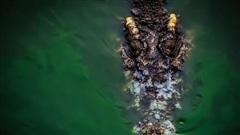 Indonesia: Người đàn ông tử vong vì bị cá sấu tấn công khi đang tắm sông