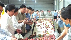 Doanh nghiệp xuất khẩu nông sản đang 'tự bơi'