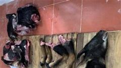 Phẫn nộ vụ vào VQG bẫy sơn dương xẻ thịt đem bán