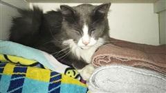 Chú mèo 'ăn trộm' hàng chục món đồ của hàng xóm vì quá buồn chán