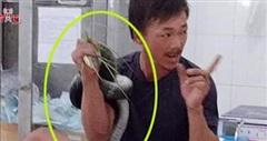 Rắn hổ mang chúa 2,5m cắn người, người ôm luôn rắn vô bệnh viện cấp cứu