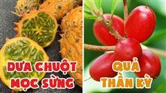 10 loại quả hiếm có khó tìm nhất thế giới nhưng Việt Nam đã có 4