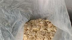 Bắt quả tang nữ 8X gom gần 4 tạ bao cao su đã sử dụng về tái chế: Bí ẩn 'người vận chuyển'