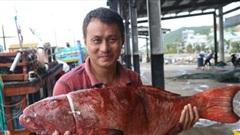 Kịch tích 'cuộc chiến' săn cá khủng nơi đại dương lúc nửa đêm