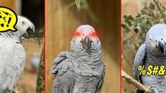 5 con vẹt bị đuổi khỏi công viên vì dạy nhau chửi bậy rồi chửi luôn cả khách tham quan