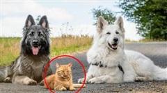 'Tôi cứu thằng mèo về nuôi cùng lũ chó, rồi nó quên mình là ai luôn': Chuyện về con mèo tưởng mình là chó đang gây sốt mạng xã hội