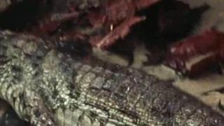 """Tưởng """"vớ"""" được lươn điện, """"quái vật đầm lầy"""" bị giật đến cứng đơ người"""