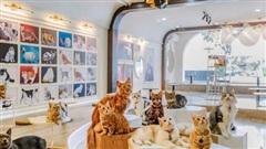 Hội mê boss, nhất định phải ghé check-in quán cafe mèo siêu chất này - Catfe