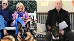 Sau chiến thắng trước ông Donald Trump, đến chú chó của tân Tổng thống Joe Biden cũng chuẩn bị đi vào lịch sử
