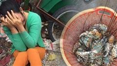 Người dân Phú Yên ôm mặt khóc ròng vì tôm hùm chết hàng loạt sau bão số 12, phải bán tháo gây thiệt hại hàng tỉ đồng