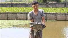 Nông dân nuôi đàn 'thuỷ quái' dưới ao, toàn con to bự, bắt bán bỏ túi gần nửa tỷ mỗi năm