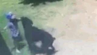 """Bé trai vẫy vùng bỏ chạy khỏi sự tấn công """"điên cuồng"""" của chó Rottweiler"""