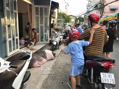 Chiều nào cũng được 'mẹ' dẫn ra trước cửa nằm phơi nắng, Ụt Ụt lại nhận được rất nhiều sự chú ý của người qua đường.