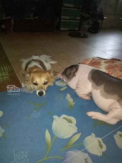 Nhà cô Nga nuôi sẵn một chú chó, đây là bạn tốt của Ụt Ụt những ngày mới về nhà.