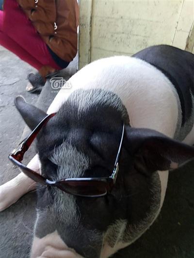 Các cậu con trai trong nhà hay nghịch trò đeo kính, thắt nơ cho Ụt Ụt.