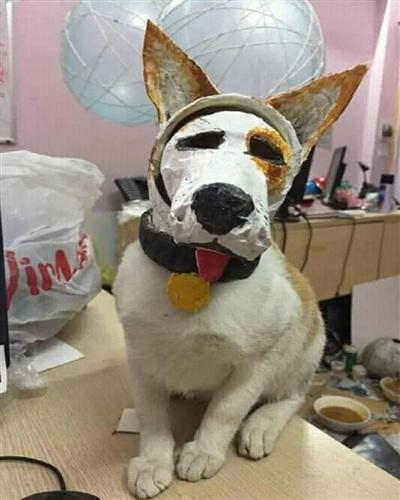 Nhìn cũng giống một chú cún chứ nhỉ?