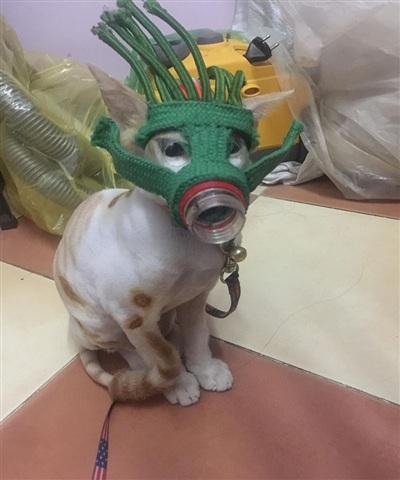 Mặt nạ chó chưa đủ, còn bắt Mỡ đeo 'mặt nạ phòng độc thổ dân'này nữa!
