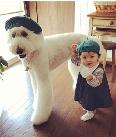 Cặp đôi chú cún khổng lồ và cô bé 2 tuổi dễ thương hết nấc làm tan chảy mạng xã hội 1