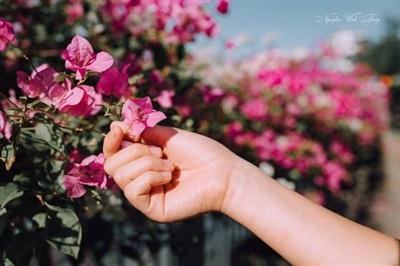 Mùa hoa tháng Tư say lòng hai miền đất nước 9