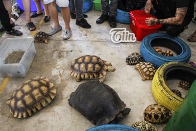 Rùa cạn dễ nuôi, sống lâu. Càng lớn càng ăn nhiều.