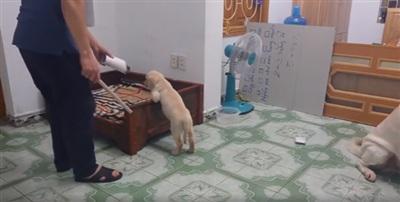 Vì nghịch ngợm nên chó nhỏ bị chủ phạt.